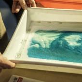 Ed ecco la prima stampa che prende vita una volta immersa il foglio esposto in acqua. © Salvo Veneziano/Palermofoto.
