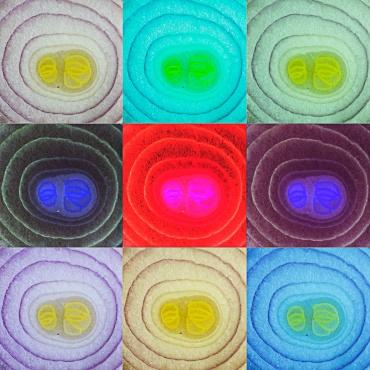 © Elena Beltrandi   Corso Intermedio di Fotografia -   All'inizio del Corso Intermedio di Fotografia di FPschool viene proposta un'esercitazione che prevede la ricerca di una texture. Apparentemente semplice come esercizio in realtà permette di affinare le doti di precisione nell'inquadratura. Particolare attenzione infatti viene richiesta nel mantenere il piano focale parallelo a quello del soggetto e nella cura dell'illuminazione che deve essere in grado di esaltare la trama della superficie del soggetto. Inoltre chiediamo ai nostri studenti di sperimentare cosa accade impostando un bilanciamento del bianco errato. A completamento chi vuole può realizzare una fotocomposizione con gli scatti realizzati che rimandi a su volta al concerto di texture. Nel caso di Elena le tre immagini inferiori sono state duplicare e passate al negativo. Un modo divertente per sperimentare le potenzialità creative della fotografia e svolgere un esercizio tecnico che richiede grande precisione.